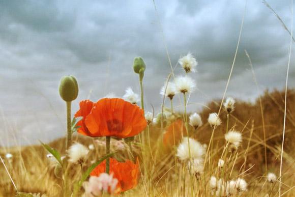 Nàng Thu lả lướt trên những cành hoa (11)