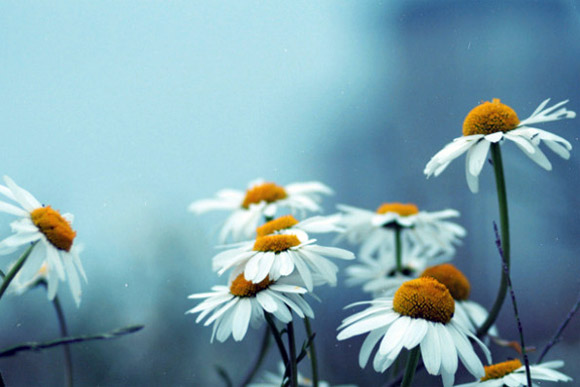 Nàng Thu lả lướt trên những cành hoa (10)