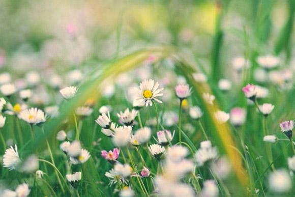 Nàng Thu lả lướt trên những cành hoa (9)