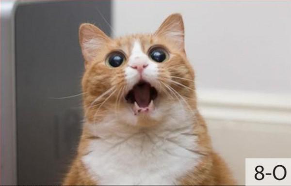 Thú vị: mèo biểu cảm như 'Emoticons' | chủ đề mèo | Thú vị (11)