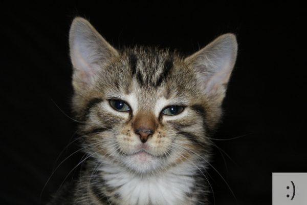 Thú vị: mèo biểu cảm như 'Emoticons' | chủ đề mèo | Thú vị (10)