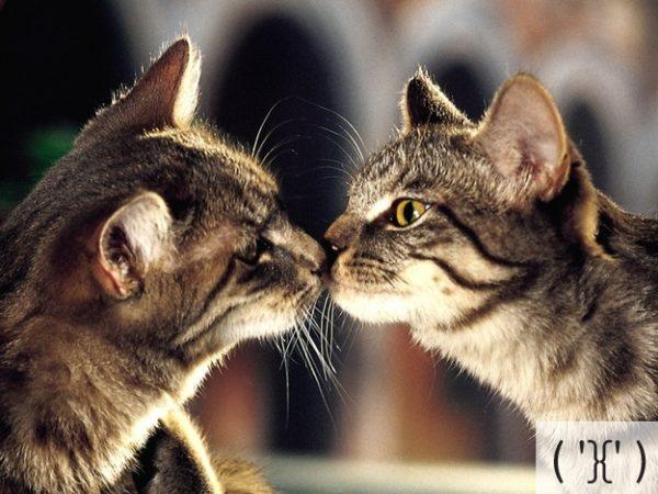 Thú vị: mèo biểu cảm như 'Emoticons' | chủ đề mèo | Thú vị (9)
