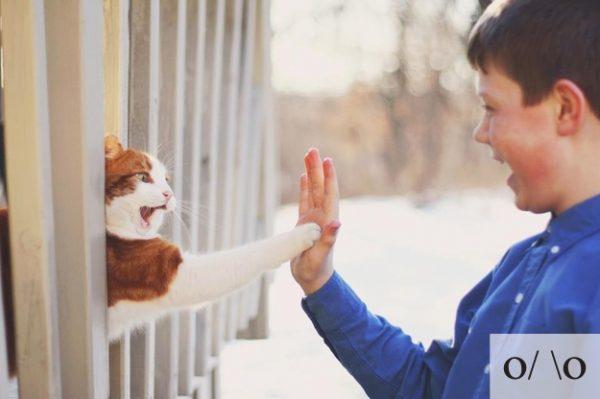 Thú vị: mèo biểu cảm như 'Emoticons' | chủ đề mèo | Thú vị (8)