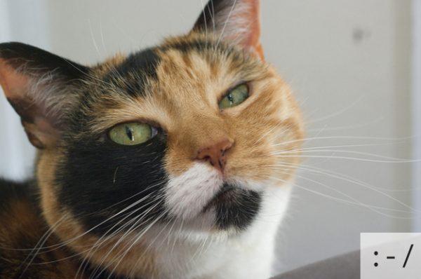 Thú vị: mèo biểu cảm như 'Emoticons' | chủ đề mèo | Thú vị (4)