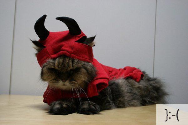 Thú vị: mèo biểu cảm như 'Emoticons' | chủ đề mèo | Thú vị (3)
