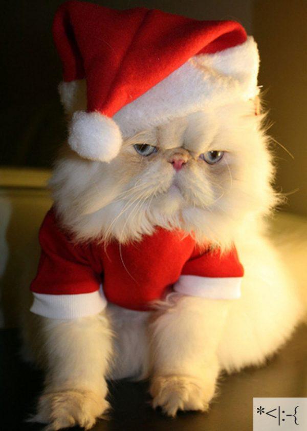 Thú vị: mèo biểu cảm như 'Emoticons' | chủ đề mèo | Thú vị (2)