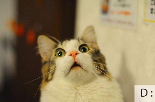 Thú vị: mèo biểu cảm như 'Emoticons' | chủ đề mèo | Thú vị (1)