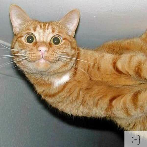 Thú vị: mèo biểu cảm như 'Emoticons' | chủ đề mèo | Thú vị (17)
