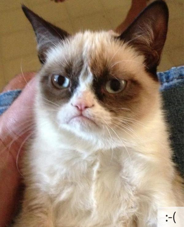 Thú vị: mèo biểu cảm như 'Emoticons' | chủ đề mèo | Thú vị (16)