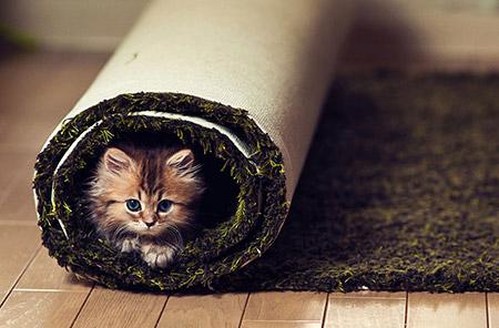 Chú mèo Daisy khiến cư dân mạng phát cuồng | Anh meo xinh (12)