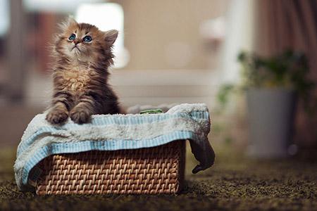 Chú mèo Daisy khiến cư dân mạng phát cuồng | Anh meo xinh (3)