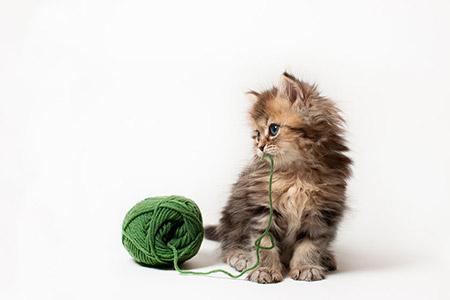 Chú mèo Daisy khiến cư dân mạng phát cuồng | Anh meo xinh (2)