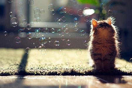 Chú mèo Daisy khiến cư dân mạng phát cuồng | Anh meo xinh (1)