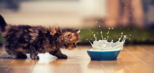 Chú mèo Daisy khiến cư dân mạng phát cuồng | Anh meo xinh (10)