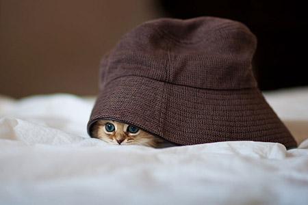 Chú mèo Daisy khiến cư dân mạng phát cuồng | Anh meo xinh (9)