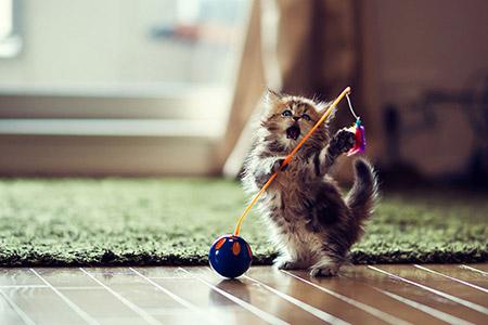 Chú mèo Daisy khiến cư dân mạng phát cuồng | Anh meo xinh (8)