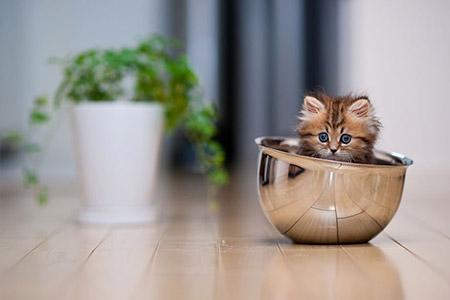 Chú mèo Daisy khiến cư dân mạng phát cuồng | Anh meo xinh (7)