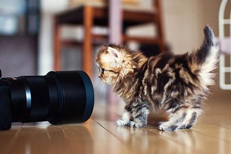Chú mèo Daisy khiến cư dân mạng phát cuồng | Anh meo xinh (6)