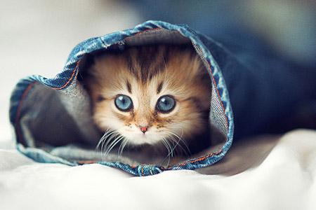 Chú mèo Daisy khiến cư dân mạng phát cuồng | Anh meo xinh (5)