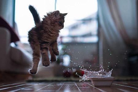 Chú mèo Daisy khiến cư dân mạng phát cuồng | Anh meo xinh (4)