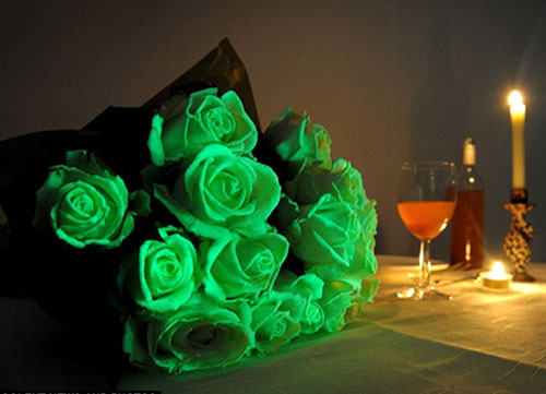 Hoa phát sáng trong lễ hội Ma