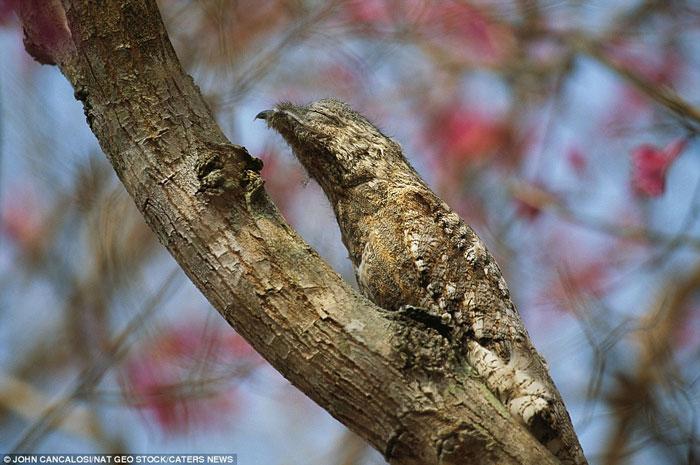 Những bậc thầy ngụy trang trong tự nhiên (14)