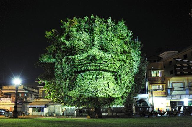 Kinh ngạc tượng 3D từ...cây và ánh sáng | Chuyện lạ (5)