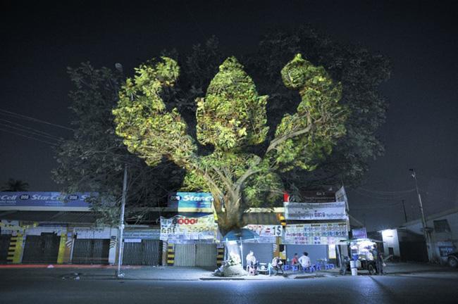 Kinh ngạc tượng 3D từ...cây và ánh sáng | Chuyện lạ (4)