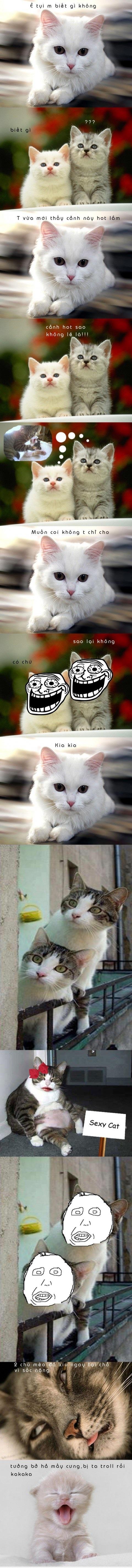Ảnh vui mèo: Mèo cũng Troll