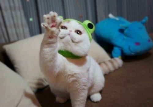 """Ảnh vui mèo: ngắm """"siêu mẫu"""" mèo kute nhất (6)"""