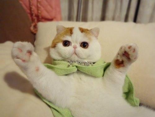 """Ảnh vui mèo: ngắm """"siêu mẫu"""" mèo kute nhất (56)"""