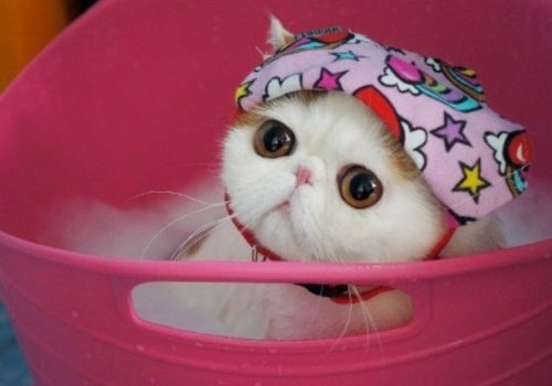 """Ảnh vui mèo: ngắm """"siêu mẫu"""" mèo kute nhất (55)"""