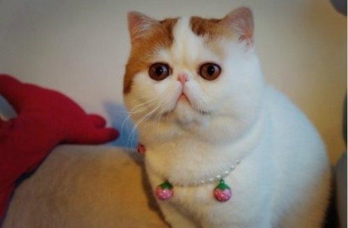 """Ảnh vui mèo: ngắm """"siêu mẫu"""" mèo kute nhất (54)"""
