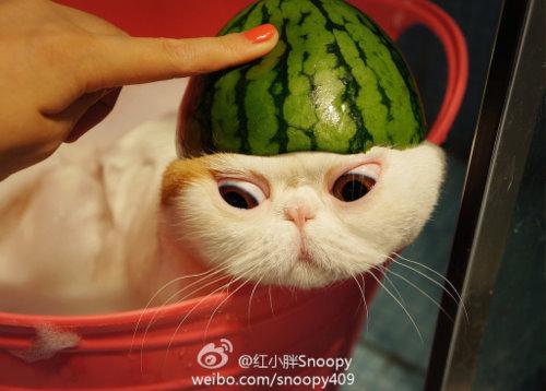 """Ảnh vui mèo: ngắm """"siêu mẫu"""" mèo kute nhất (53)"""
