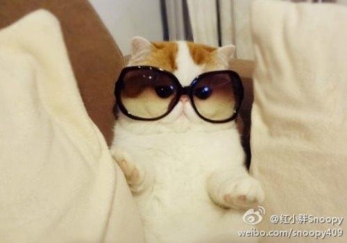 """Ảnh vui mèo: ngắm """"siêu mẫu"""" mèo kute nhất (52)"""