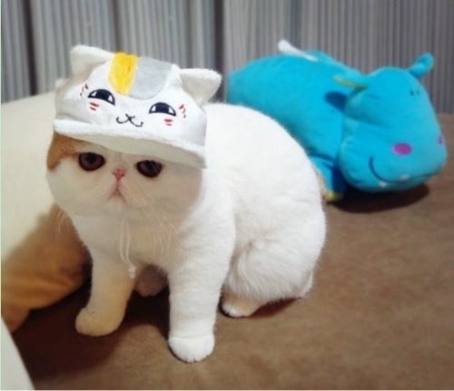 """Ảnh vui mèo: ngắm """"siêu mẫu"""" mèo kute nhất (50)"""