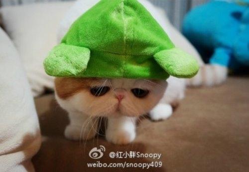 """Ảnh vui mèo: ngắm """"siêu mẫu"""" mèo kute nhất (49)"""