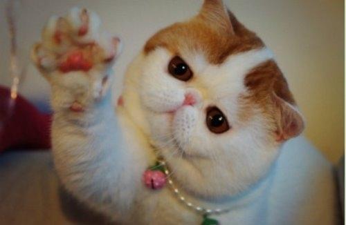 """Ảnh vui mèo: ngắm """"siêu mẫu"""" mèo kute nhất (48)"""