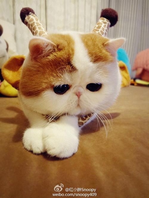 """Ảnh vui mèo: ngắm """"siêu mẫu"""" mèo kute nhất (5)"""