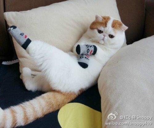 """Ảnh vui mèo: ngắm """"siêu mẫu"""" mèo kute nhất (46)"""