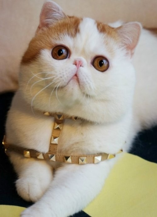 """Ảnh vui mèo: ngắm """"siêu mẫu"""" mèo kute nhất (43)"""