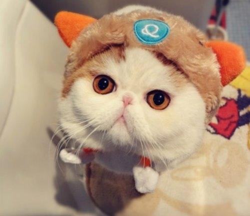 """Ảnh vui mèo: ngắm """"siêu mẫu"""" mèo kute nhất (42)"""