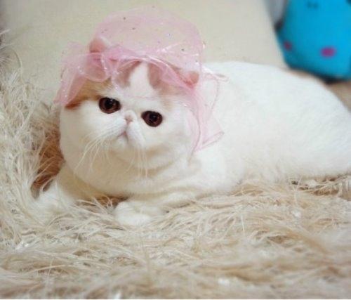 """Ảnh vui mèo: ngắm """"siêu mẫu"""" mèo kute nhất (41)"""