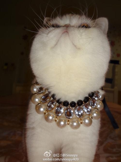 """Ảnh vui mèo: ngắm """"siêu mẫu"""" mèo kute nhất (40)"""