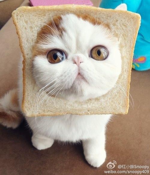 """Ảnh vui mèo: ngắm """"siêu mẫu"""" mèo kute nhất (37)"""