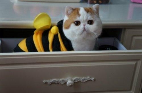 """Ảnh vui mèo: ngắm """"siêu mẫu"""" mèo kute nhất (36)"""