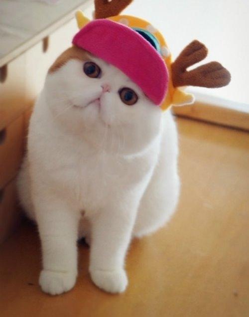 """Ảnh vui mèo: ngắm """"siêu mẫu"""" mèo kute nhất (35)"""