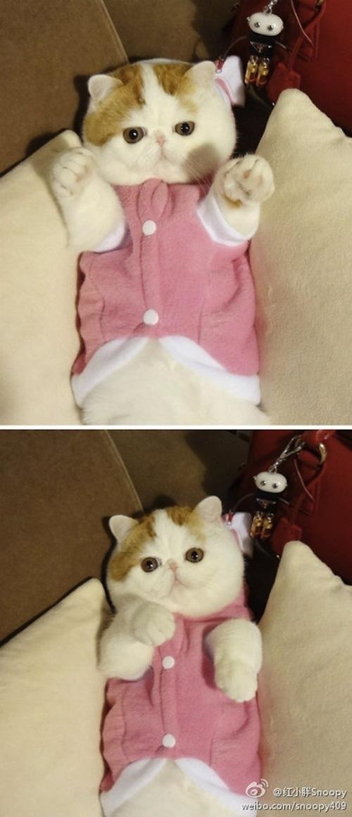 """Ảnh vui mèo: ngắm """"siêu mẫu"""" mèo kute nhất (34)"""