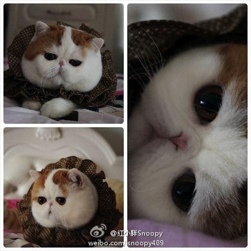"""Ảnh vui mèo: ngắm """"siêu mẫu"""" mèo kute nhất (33)"""