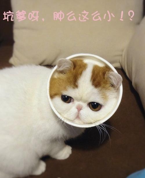 """Ảnh vui mèo: ngắm """"siêu mẫu"""" mèo kute nhất (32)"""